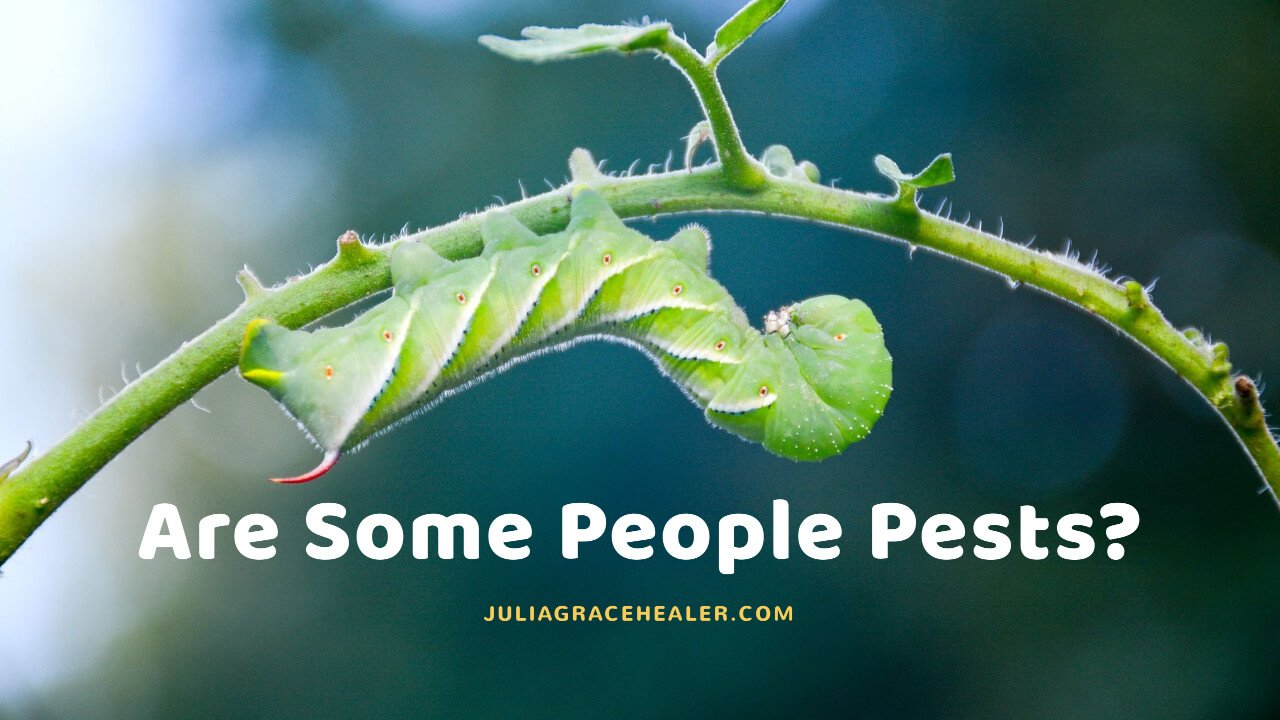 Some People Pests - Caterpillar
